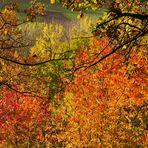 Der Herbst in zarten Farben