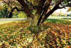 Der Herbst ist angekommen