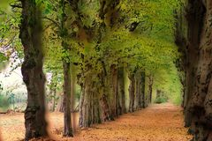 der Herbst ist auf dem Weg