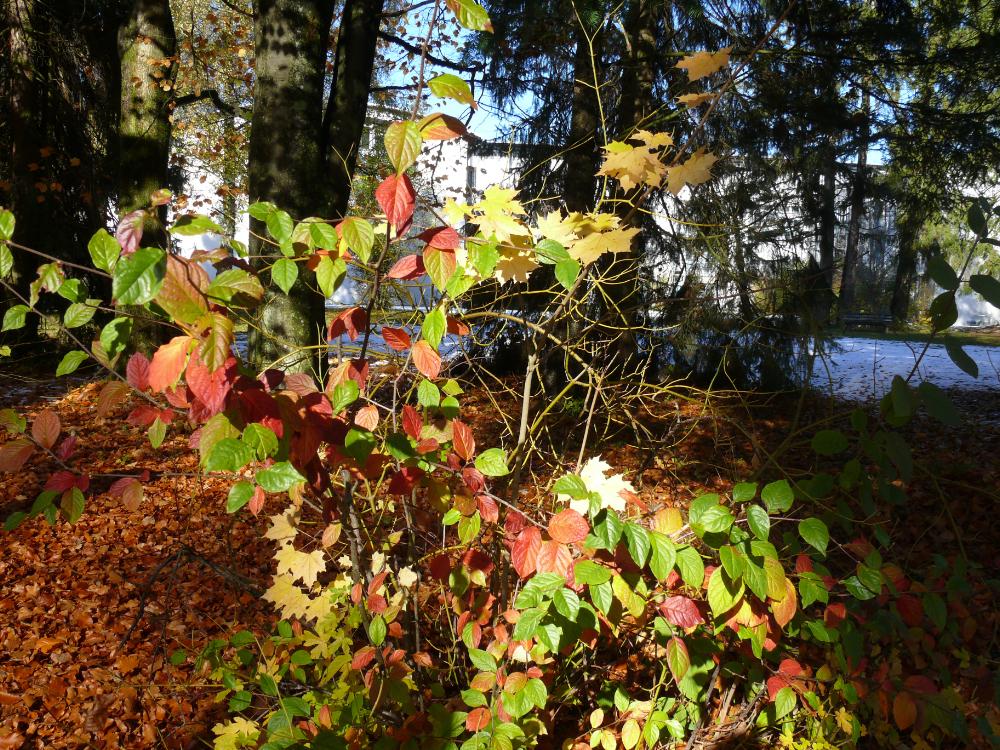 der Herbst ist bunt,