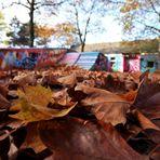 der Herbst ist bunt ...
