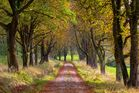 Der Herbst ist da...