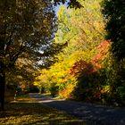 ...der Herbst ist da...
