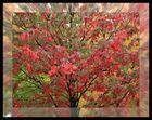 ..der Herbst ist da