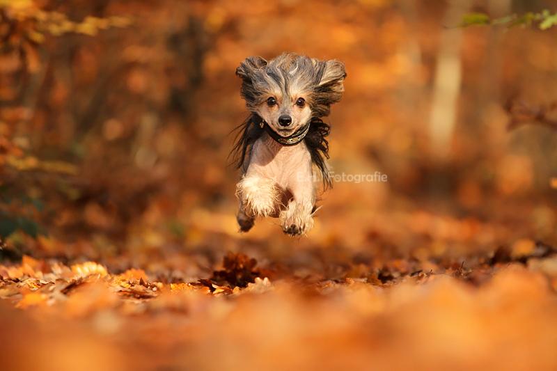 Der Herbst ist da :)