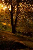 Der Herbst ist da:-)