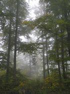 Der Herbst ist da - auch Nebel kann vderzaubern