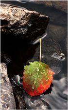 ... der Herbst ist da :-)