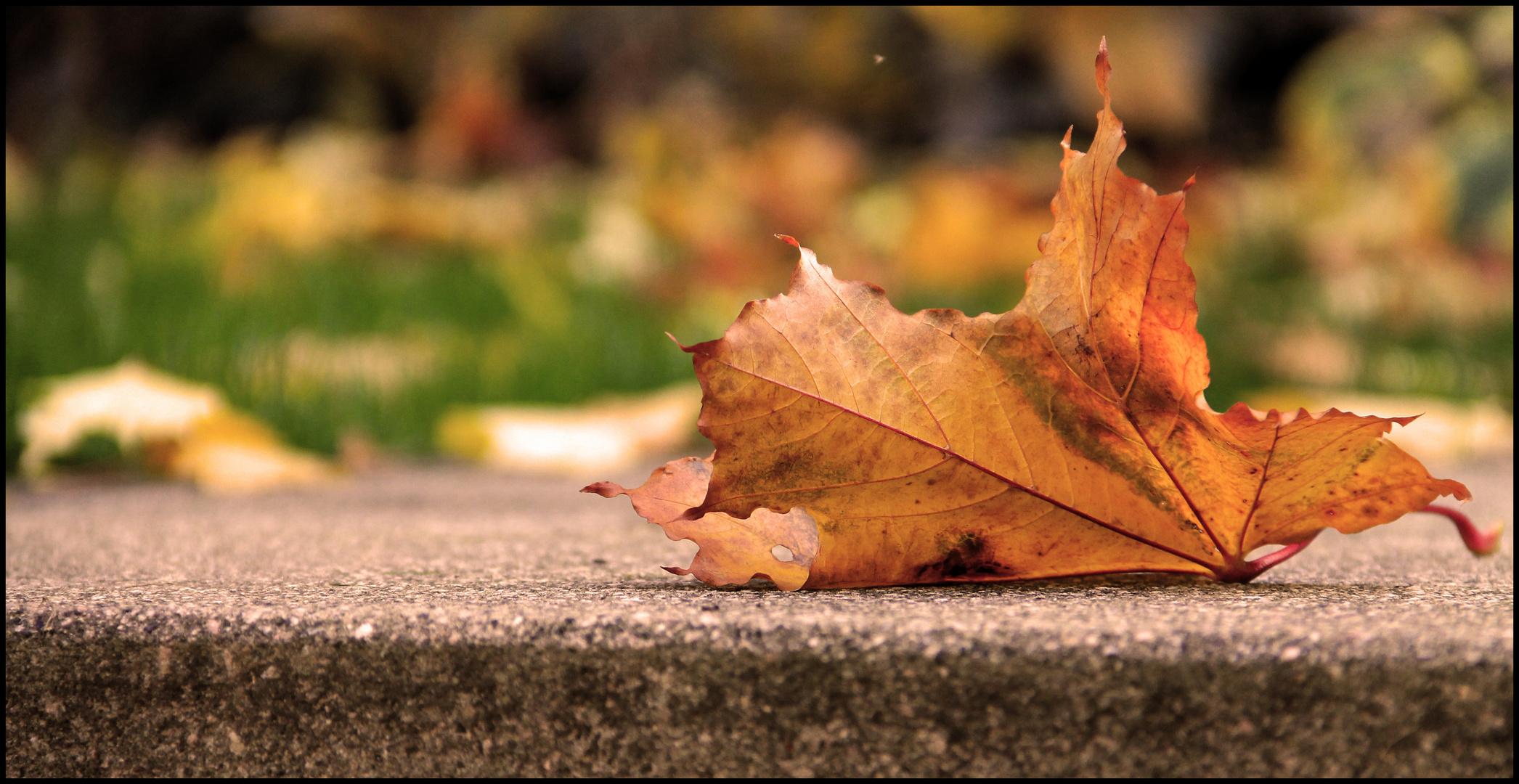 Der Herbst ist der Frühling des Winters.