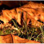 Der Herbst ist der Frühling des Winters