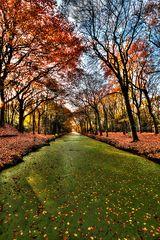 Der Herbst ist quietschebunt :-)