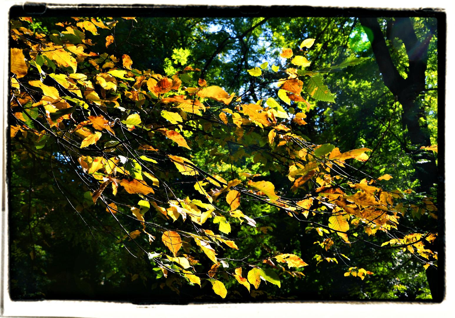 Der Herbst ist wie ein zweiter Frühling...