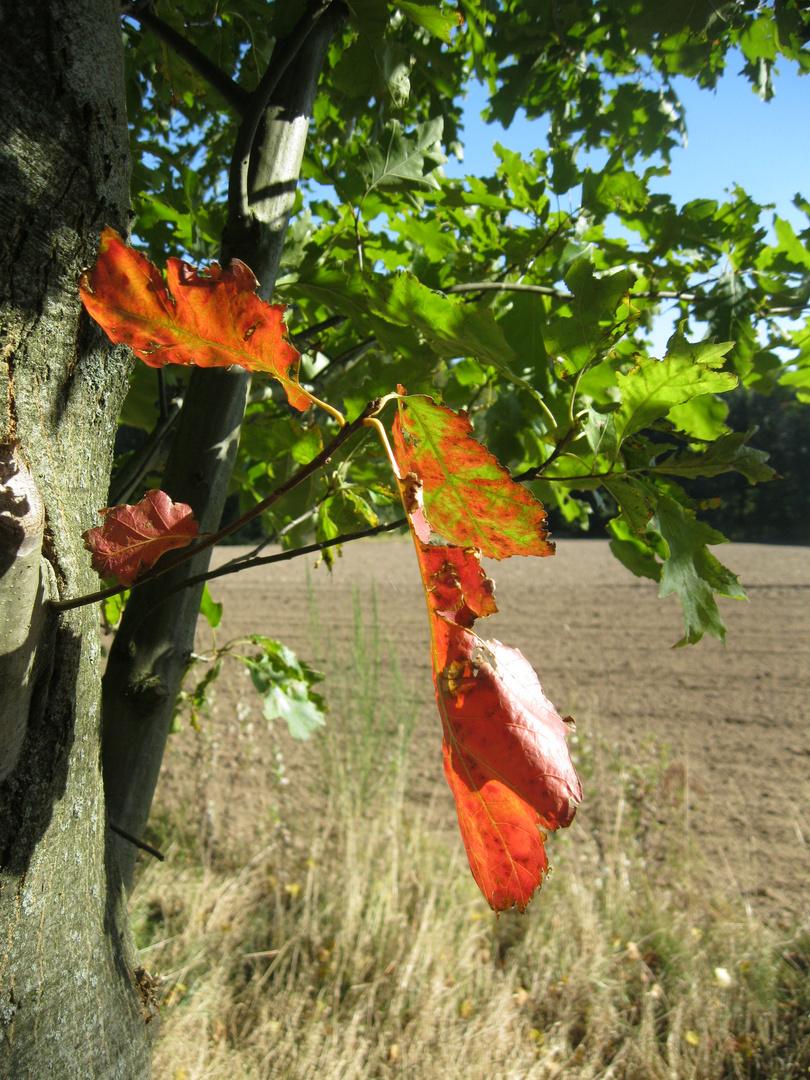 Der Herbst klopft an die Tür! einen Spalt ist die Tür schon offen!...