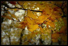 der Herbst knipst eine Lampe an ... beleuchtet all die Blätter ...