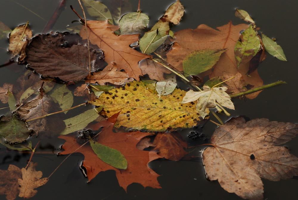 Der Herbst komm mit großen Schritten