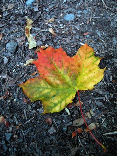 Der Herbst kommt...!