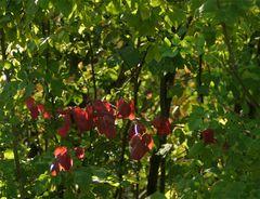 ......der Herbst kommt......