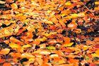 Der Herbst kommt mit großen Schritten