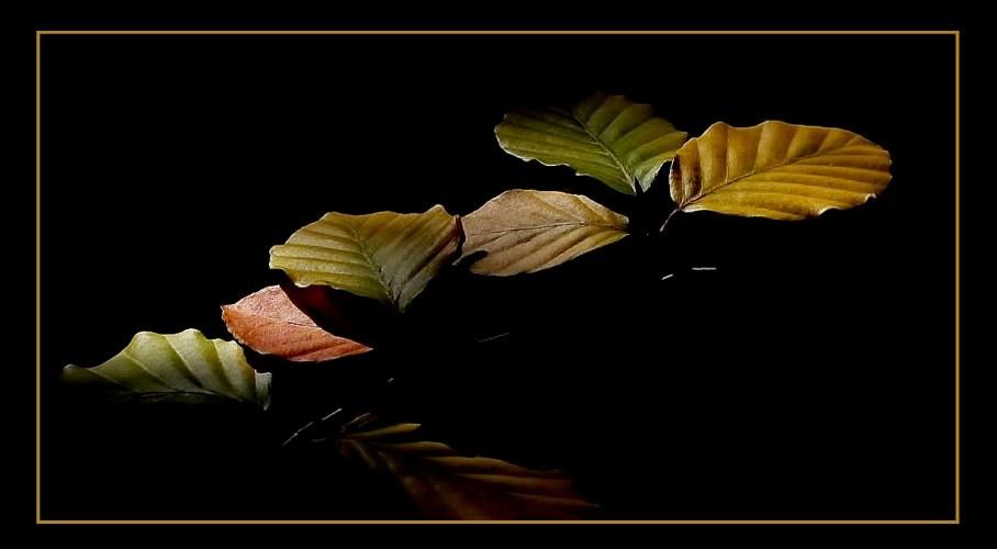 Der Herbst lässt grüßen