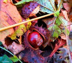Der Herbst läßt grüßen