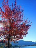 Der Herbst malt die Blätter bunt