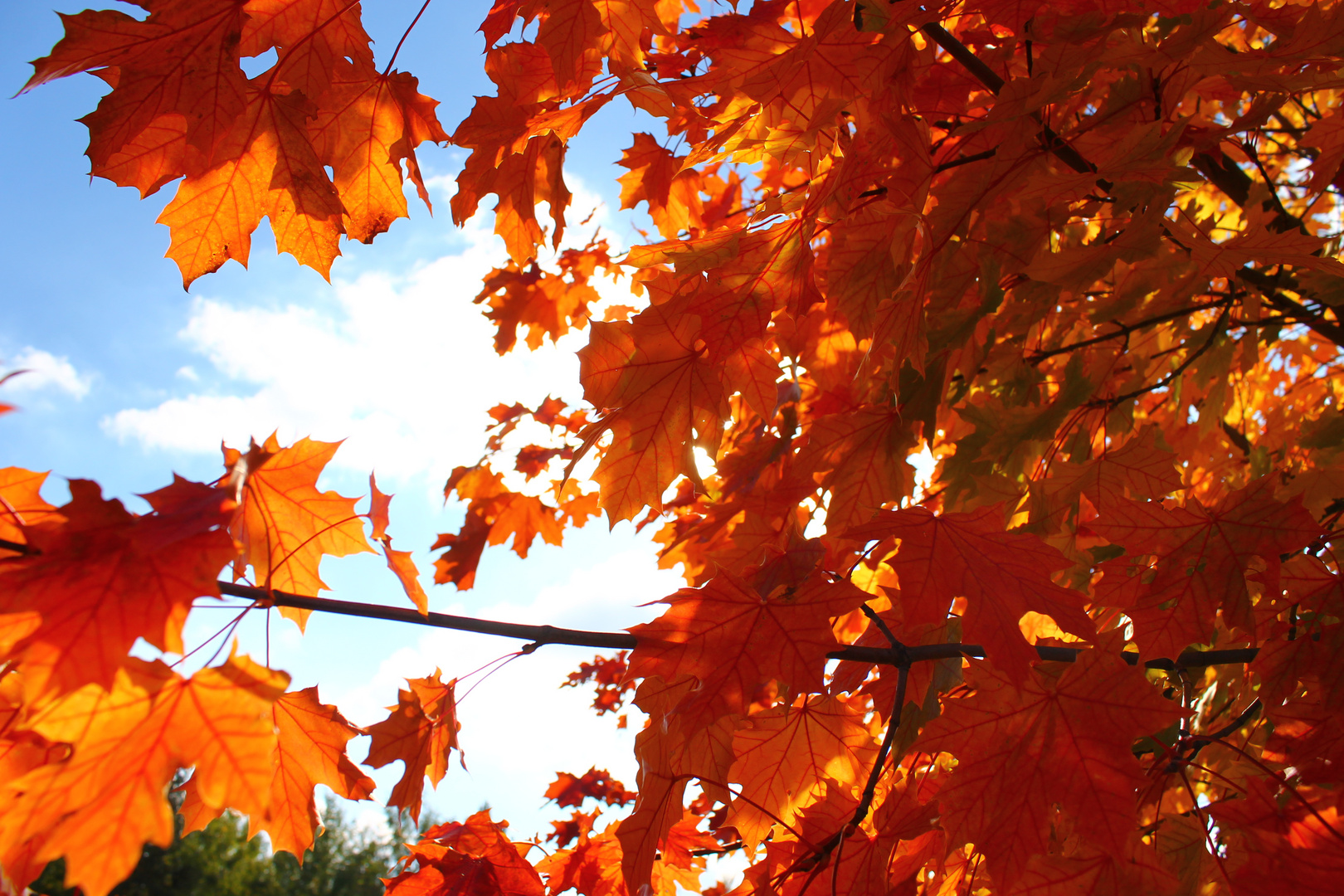 Der Herbst malt die Blätter wieder bunter...