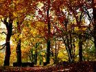 Der Herbst mit buntem Kleid...