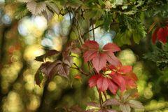 Der Herbst naht....
