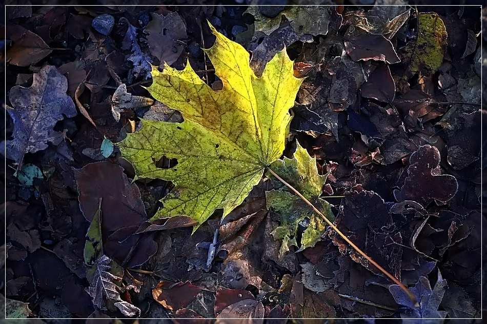 Der Herbst naht...