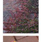 der Herbst schleicht sich durch den Garten