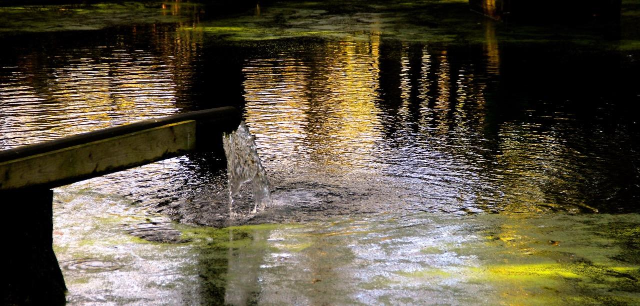 der Herbst spiegelt sich im Wasser