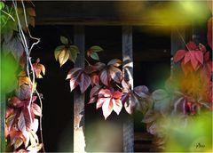 """""""der Herbst steht auf der Leiter"""""""
