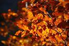 Der Herbst trägt sein schönstes Kleid