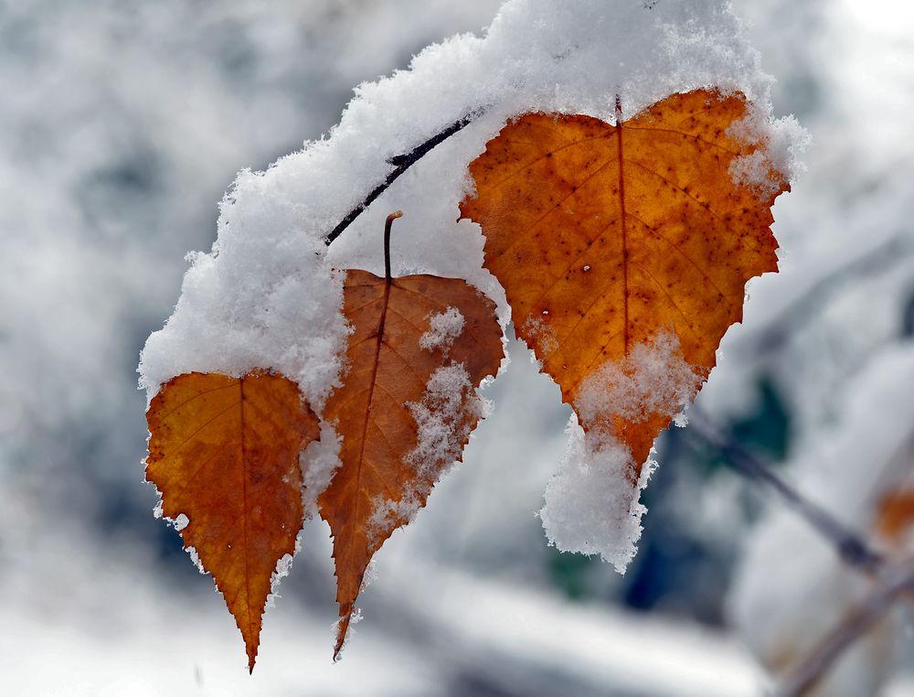 Der Herbst und der Winter umarmen sich! … - L'automne et l'hiver s'embrassent!