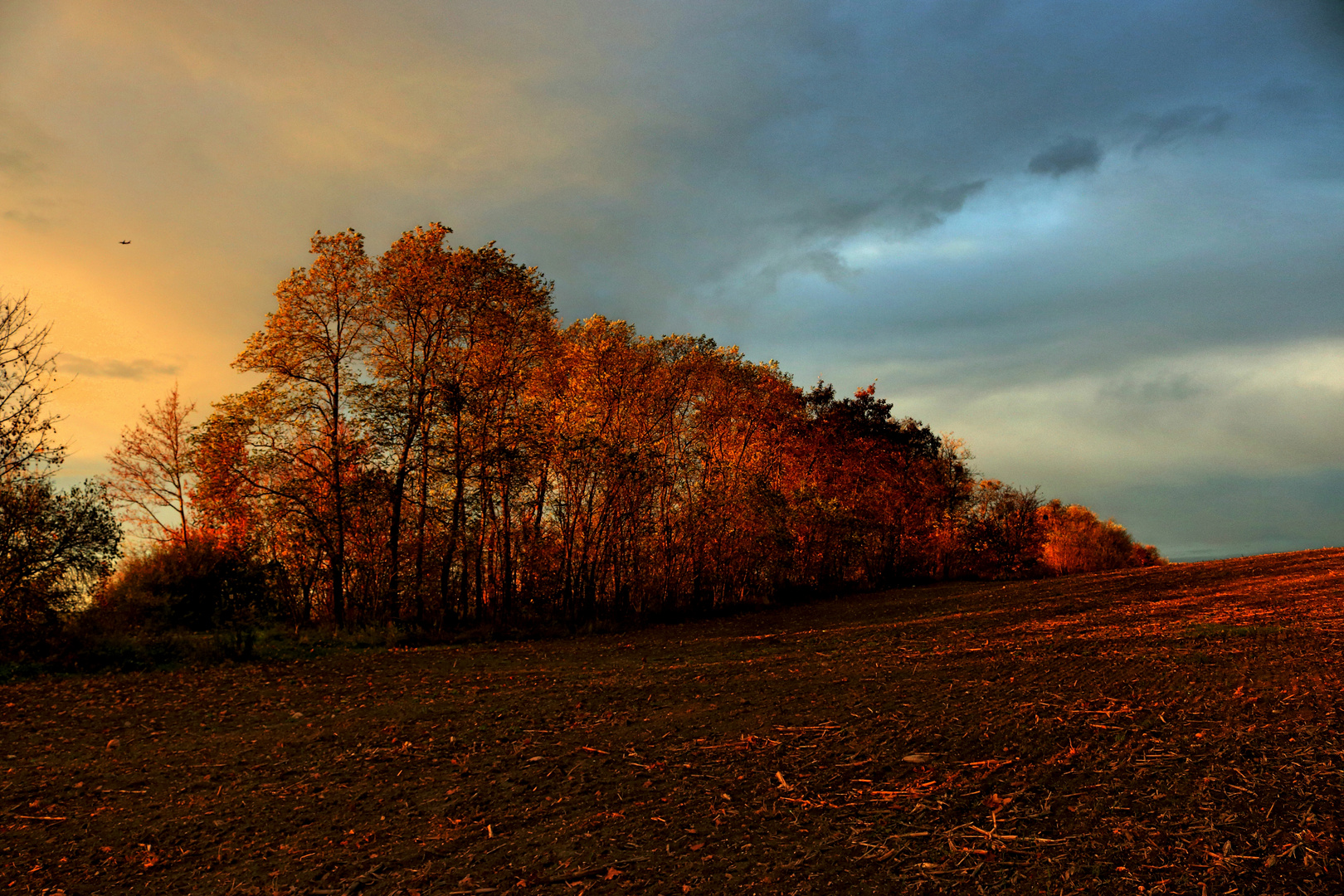 Der Herbst und seine Farben ...