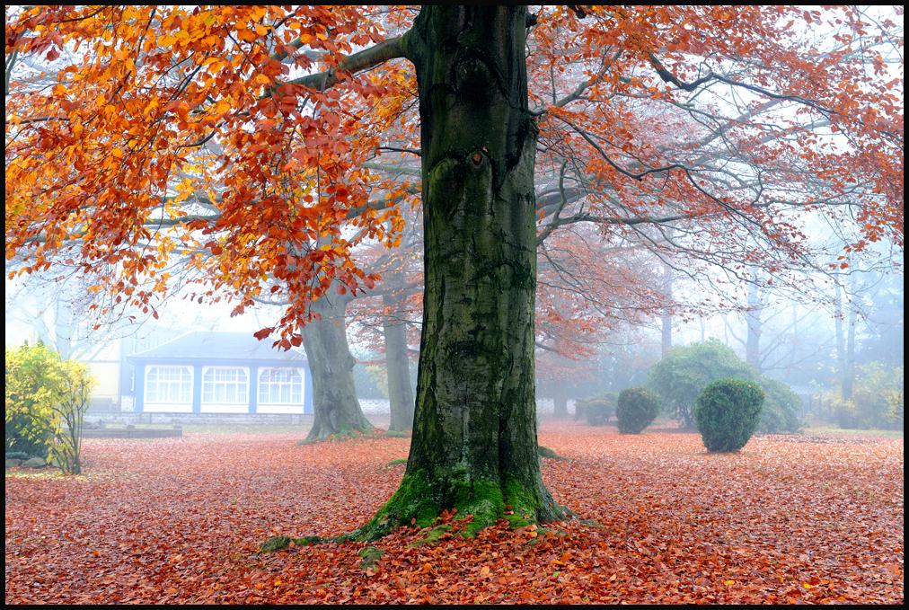 Der Herbst und seine Reize