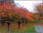 Der Herbst verabschiedet sich
