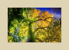 - der Herbst verabschiedet sich mit einem Leuchten -