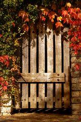 Der Herbst von seiner schönen Seite