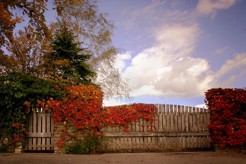 Der Herbst von seiner schönen Seite II