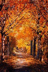 Der Herbst von seiner schönsten Seite II