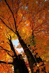Der Herbst von seiner schönsten Seite III