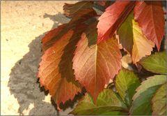 Der Herbst wirft seine Schatten