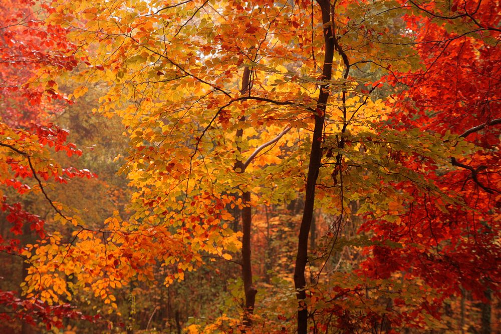 Der Herbst Z*A*U*B*E*R*