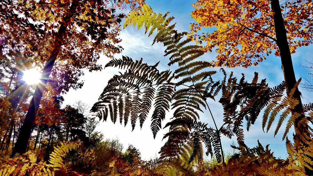 Der Herbst zeigt sich immer stärker (1) - Foto wurde auch im WDR gezeigt ...