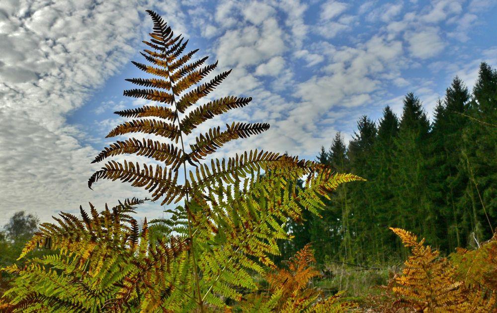 Der Herbst zeigt sich immer stärker (2)