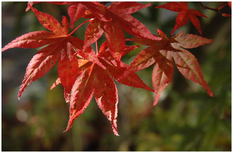 Der Herbst zieht ins Land.