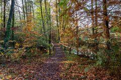 Der herbstliche Waldweg