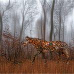 Der Herbstschimmel