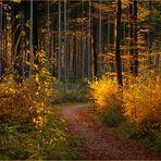 Der Herbstwald....